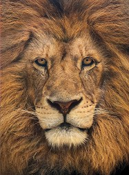 Лъв -