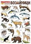 Защитени бозайници в България - стенно учебно табло - табло
