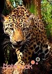 Ученическа тетрадка - Леопард - Формат A5 - тетрадка