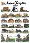 Animal Kingdom. Mammals: Стенно табло на английски език -