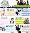 Етикети за тетрадки - Cute Animals - Комплект от 18 броя -