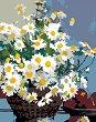 Рисуване по номера с акрилни бои - Маргаритки в кошница