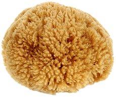 Естествена карибска коралова гъба за баня - лосион