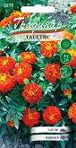 """Семена от Тагетис лилипут - Опаковка от 0.5 g от серия """"Градинар: Цветя"""""""