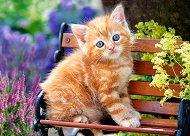Рижаво котенце - пъзел