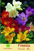 Луковици от Фрезия - Микс от цветове - Опаковка от 5 броя