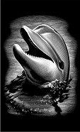 Делфин - Скреч картина с размери 11 x 18 cm