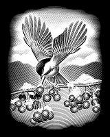 Птица - Скреч картина с размери 20 x 25 cm