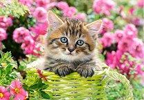 Коте сред градински цветя - пъзел