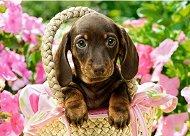 Кученце дакел в кошница - пъзел