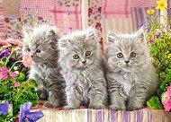 Сиви котета -