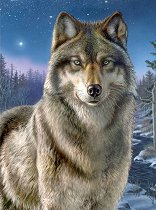 Рисуване по номера - Вълк - Комплект за картина с размери 22 x 30 cm