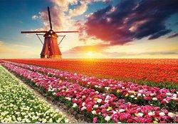 Цветно поле -