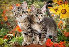 Котешки приятели -